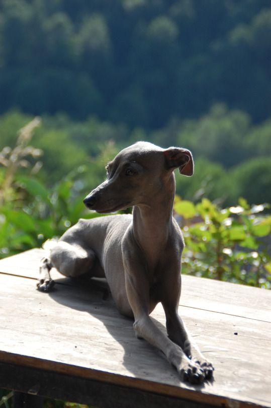 Windspielchen-Fan Thread :D - Seite 31 - Sonstiger Talk rund um den Hund - DogForum.de das große Hundeforum