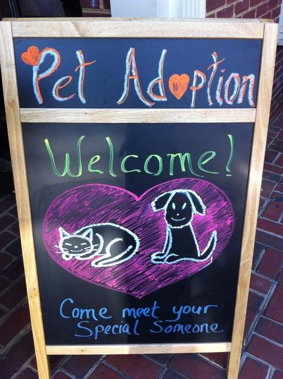 Our monthly pet adoption event at Coldwell Banker Residential Brokerage in Leesburg, VA.  We're very pet friendly here!