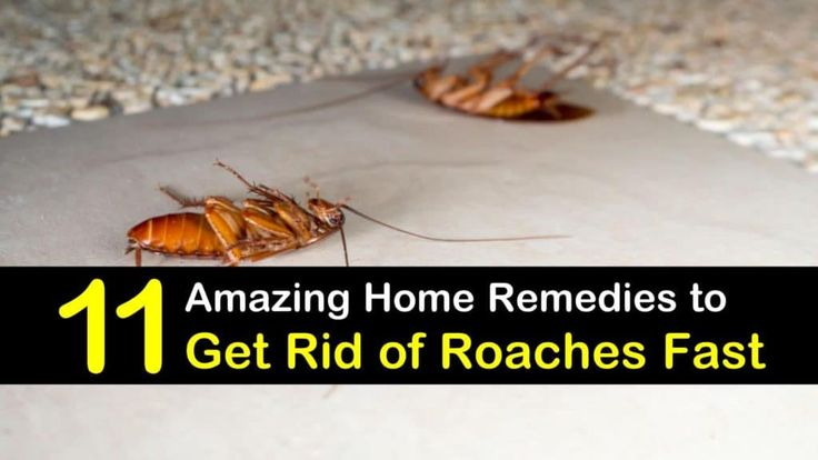home remedies to get rid of roaches in your car