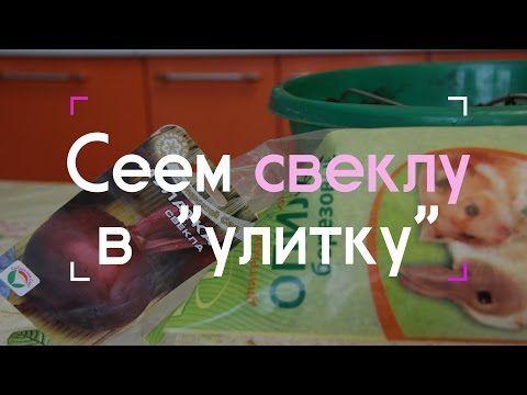 """Сеем свеклу в """"улитку"""" (07.03.2016 г.). - YouTube"""
