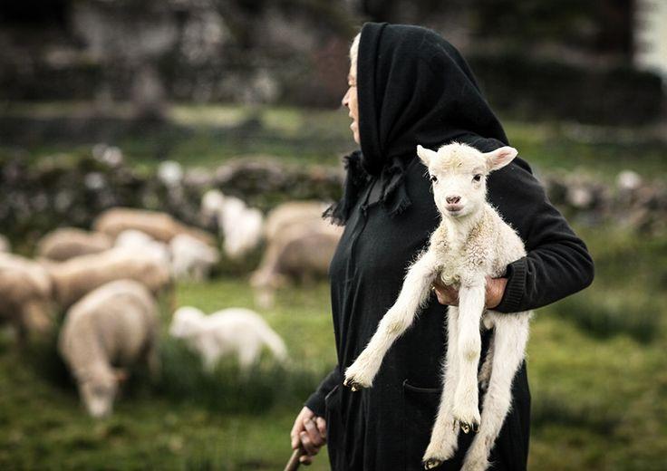 Portugal Rural por Armando Jorge
