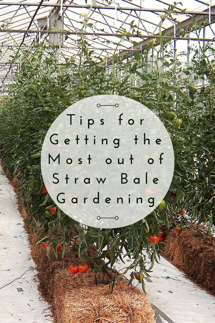 Tips for Getting the Most out of Straw Bale Gardening - Straw Bale Gardening is container gardening taken to the next level. As the straw inside the bale starts to decompose and creates the perfect environment for your seedlings.