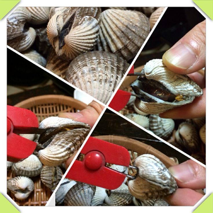 Yeh~ this is an ark shell! Very famous in Beolgyo of south of Korea. This time is in season of ark shell.