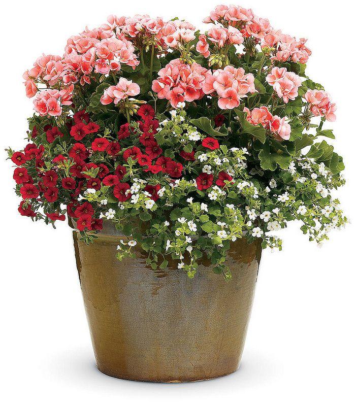 Vaso Mix De Flores Lindo Com Imagens Jardins Pequenos
