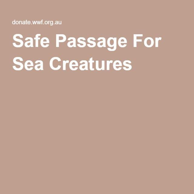 Safe Passage For Sea Creatures