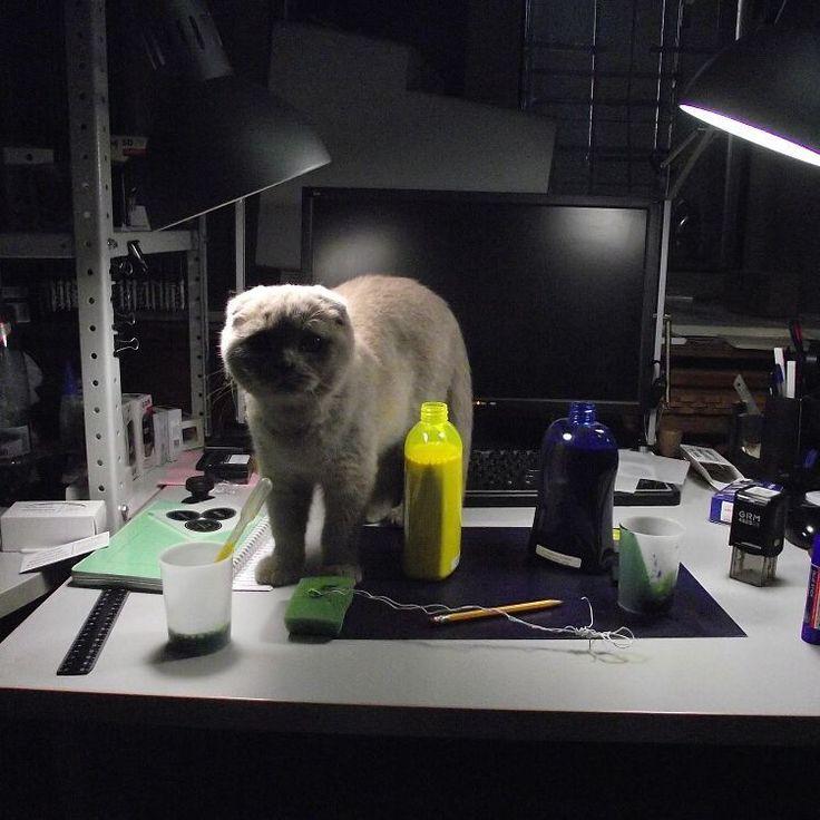 Можно было бы написать, что кот мне помогал, но нет. Это достаточно странный кот, который отличается повышенной нервозностью. И как раз в этот момент он мешал мне заколеровать чернила для печати - нервно нападая. Фотка из архива, когда мы были в другом офисе. --- #yastamp #чернила #кот #странныйкот #желтый #синий #колеровка #рабочееместо #handmade #exlibris #штамп #ип #ооо #бм #цех #мастерская