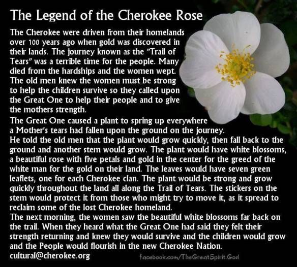 The Legend of the Cherokee Rose ….. I want one incorporated into my medicine wheel tattoo