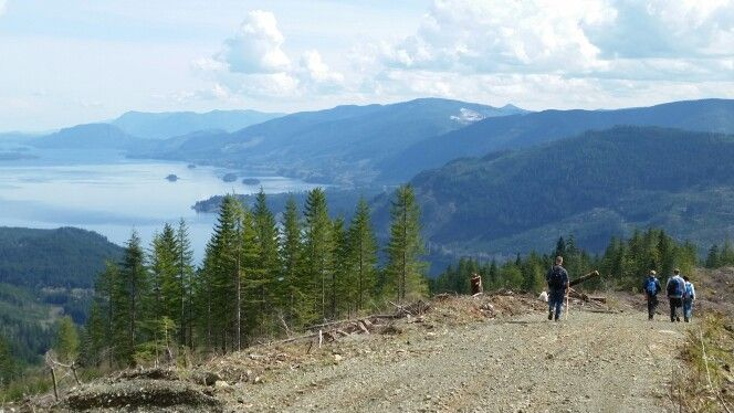 Hiking the logging roads on Heather Mountain.  Lake Cowichan, Vancouver Island BC Canada