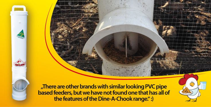dinea-a-chook-testimonial4.png#chickens feeders #hens #eggs #feeders #homesteading #farmers #drinkers #Townsville #shop #Mealworms #chickens  #PoultryFarming