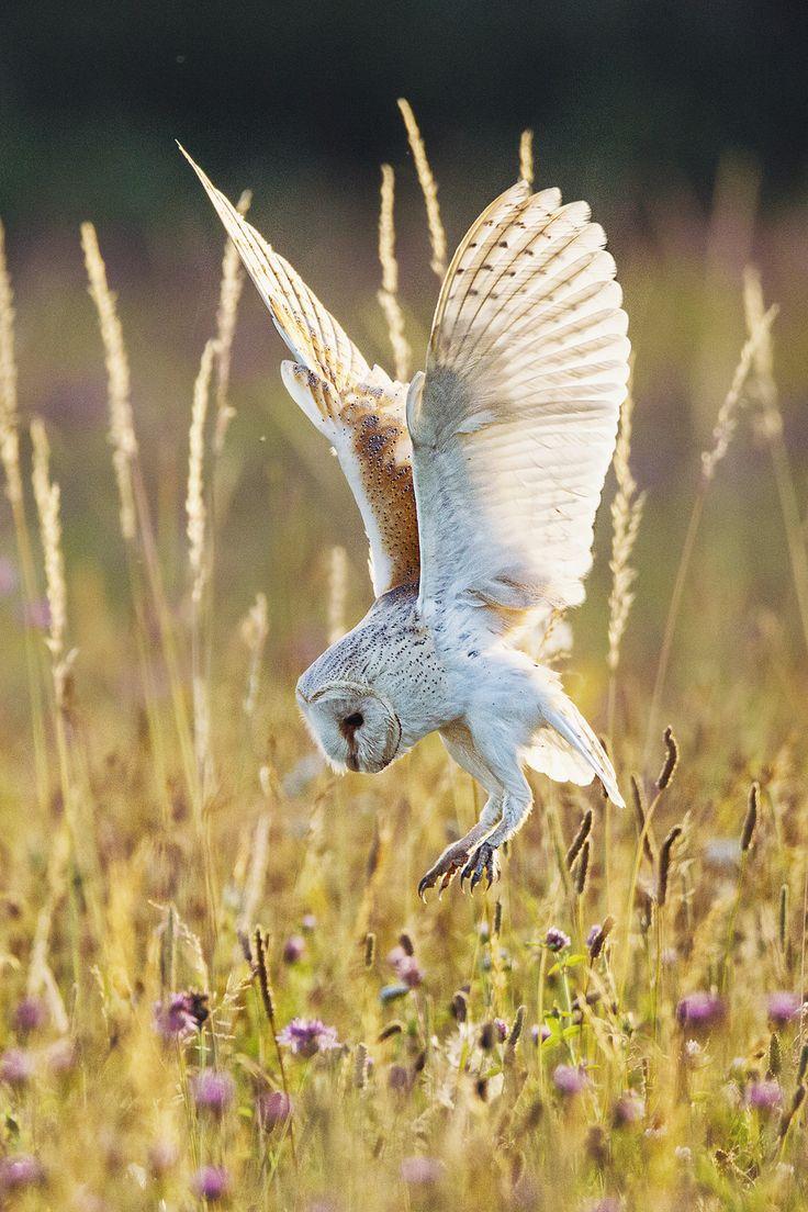 Soft Landing, Owl by Raymond Bradshaw