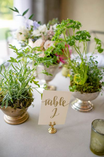 Potted plant centerpieces | The Nichols