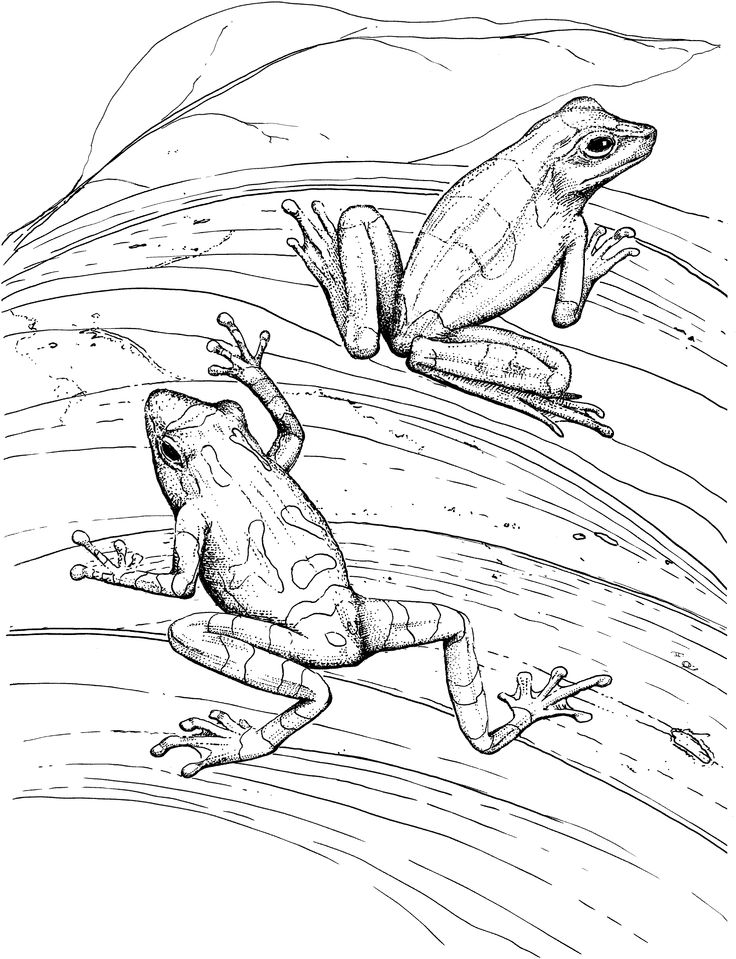 Free Frog Coloring Pages Pyrography patterns, Wood