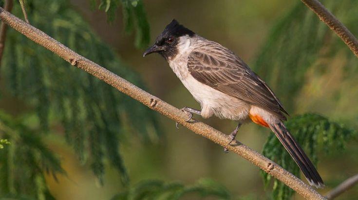 Pin Oleh Birdsny Di Suara Burung Burung