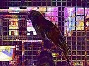 "New artwork for sale! - "" Parakeet Small Parrot Birds Cage  by PixBreak Art "" - http://ift.tt/2tFVjDp"