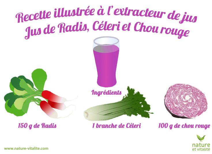 Recette illustrée pour un jus de radis, céleri et chou rouge à l'extracteur de jus. Ingrédients : 150g de radis, 1 branche de céleri, 100g de chou rouge