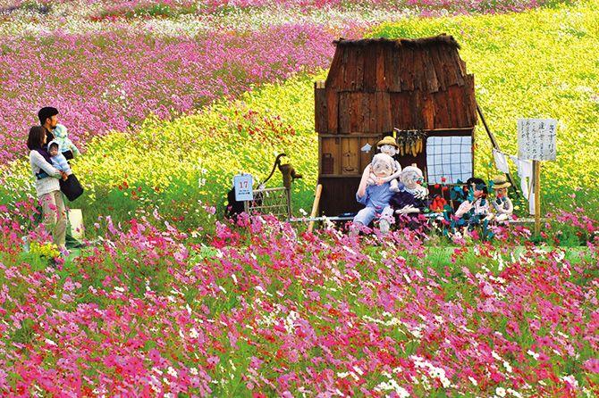 絶景広がるピンクのお花畑にキュン♪関西のコスモス畑6選