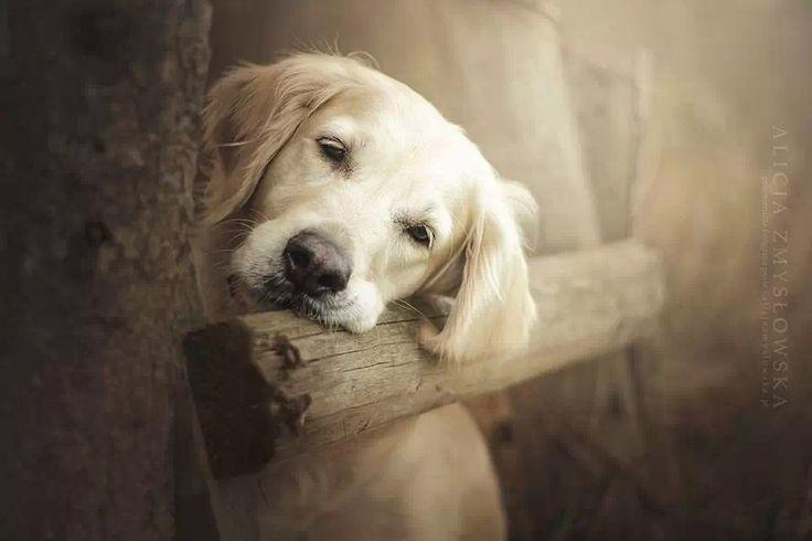 beautiful dogs ※※www.amazon.com/shops/petcuisine