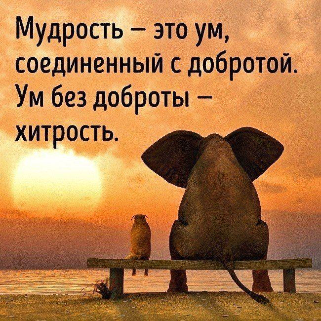 картинки открытки мудрость афоризмы животные