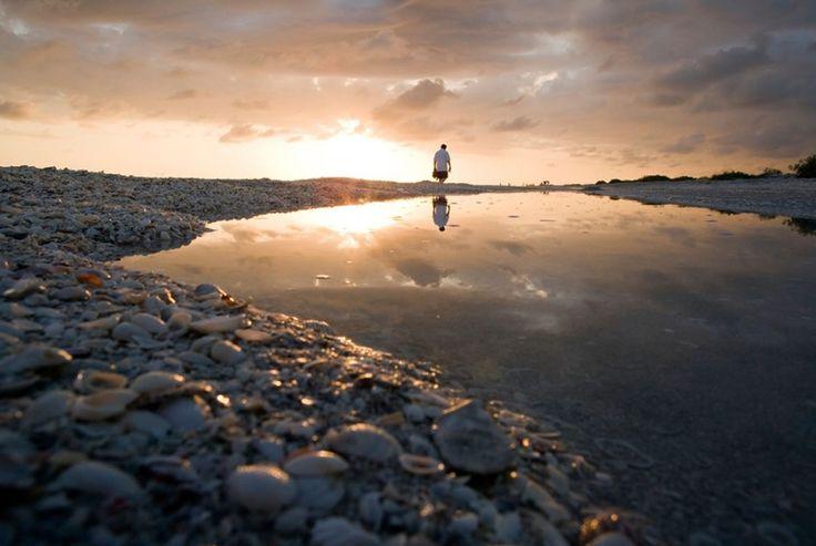 Самые красивые и необычные пляжи по мнению тех, кто знает в этом толк  Боуман, остров Санибел, Флорида, США  Читать больше: http://turism.boltai.com/topics/samye-krasivye-i-neobychnye-plyazhi-po-mneniyu-teh-kto-znaet-v-etom-tolk/