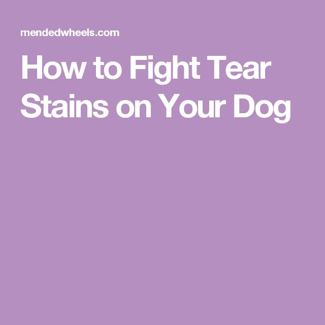 How to Fight Tear Stains on Your Dog