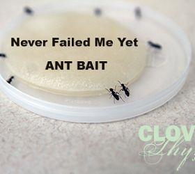 Homemade Ant Bait