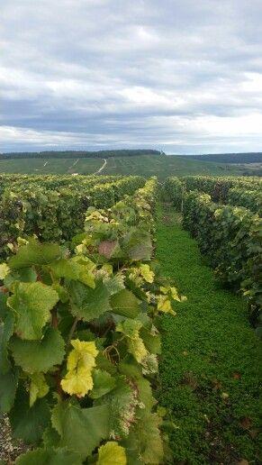 Épernay i Marne, Champagne-Ardenne