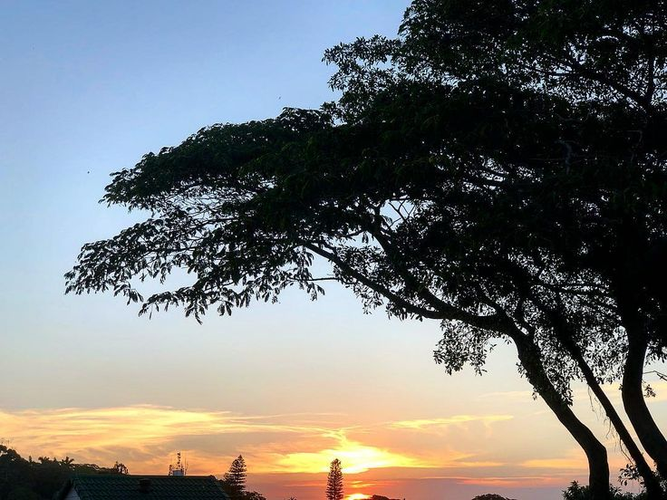 Quick snap of the #sunset this evening under a #tree in #Africa #iphone8plus