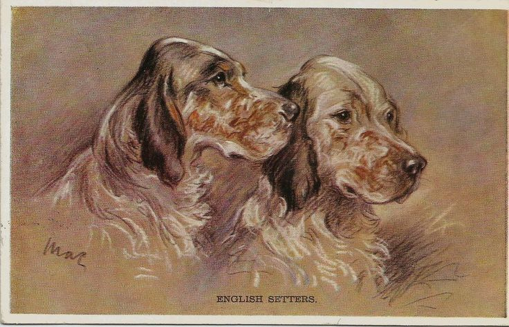 lucy dawson mac artist drawn english setter pair dog postcard