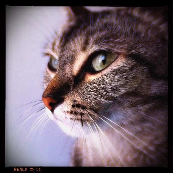 Pickle Marie the super model kitten cat.: Kittens Cat