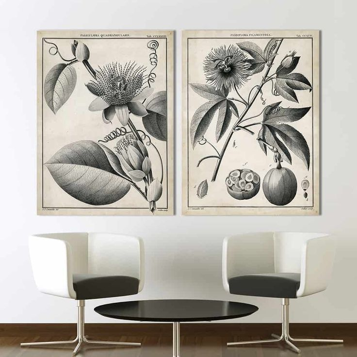 Engaging Sepia Colored Flower And Plant Frameless Poster