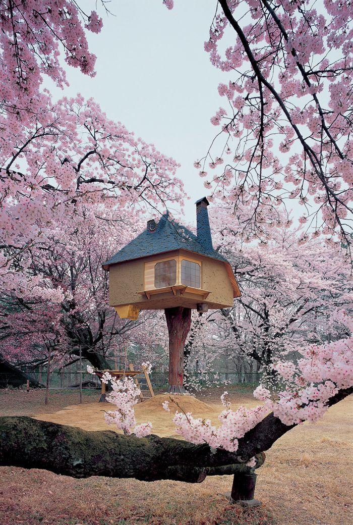 Dans les arbres, une maison d'architecte au Japon Vue du pavillon de thé Tetsu entouré de cerisiers Somei Yoshino. L'édifice est «posé» sur un tronc de cyprès japonais dont l'écorce a été préservée. © Akihisa Masuda