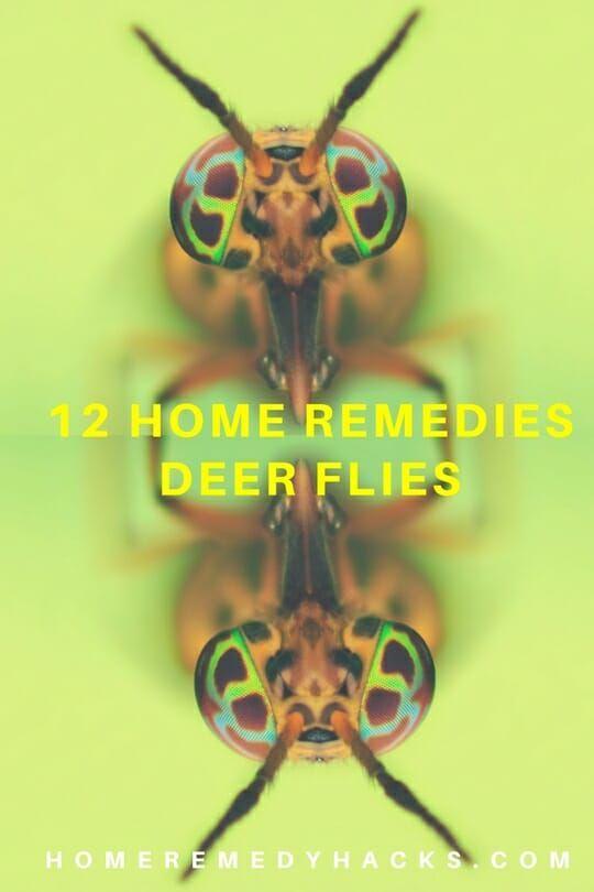 11 Home Remedies to Get Rid of Deer Flies #DeerFlies #HorseFlies