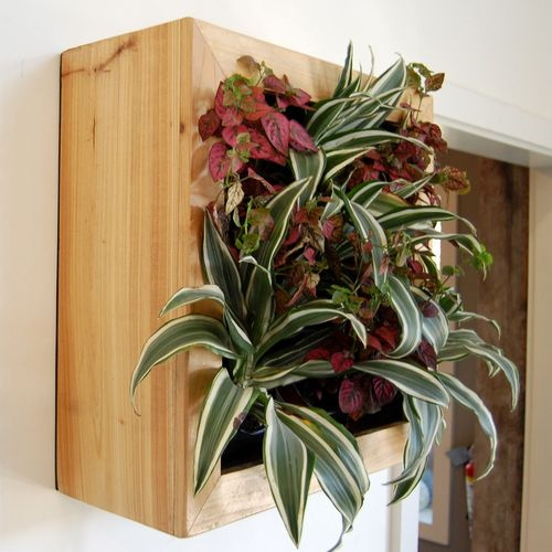 Indoor Wall Planter - Web Shop - Flora Grubb Gardens