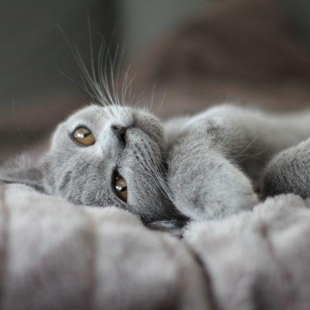 FREE Cat Watch & The Help Feral Cat Project - cat #cat #funnycats #feralcats #kitten #catcartoons