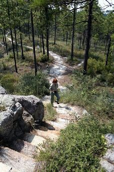 Hiking in Kisatchie Hills Wilderness, Louisiana.  Time to soak up the wilderness.