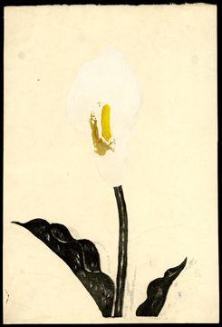 Koshiro Onchi , White Flower