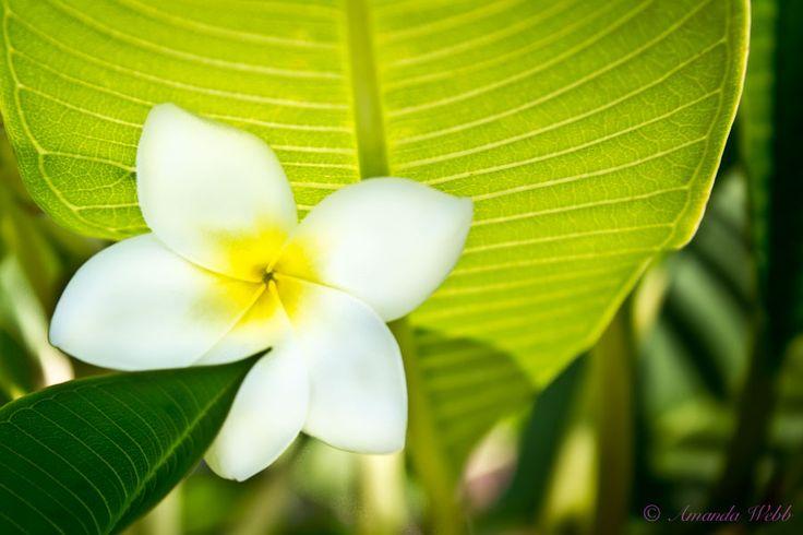 I love plumerias :)  http://photographypocketbook.com/flowers-macro-photography-details/