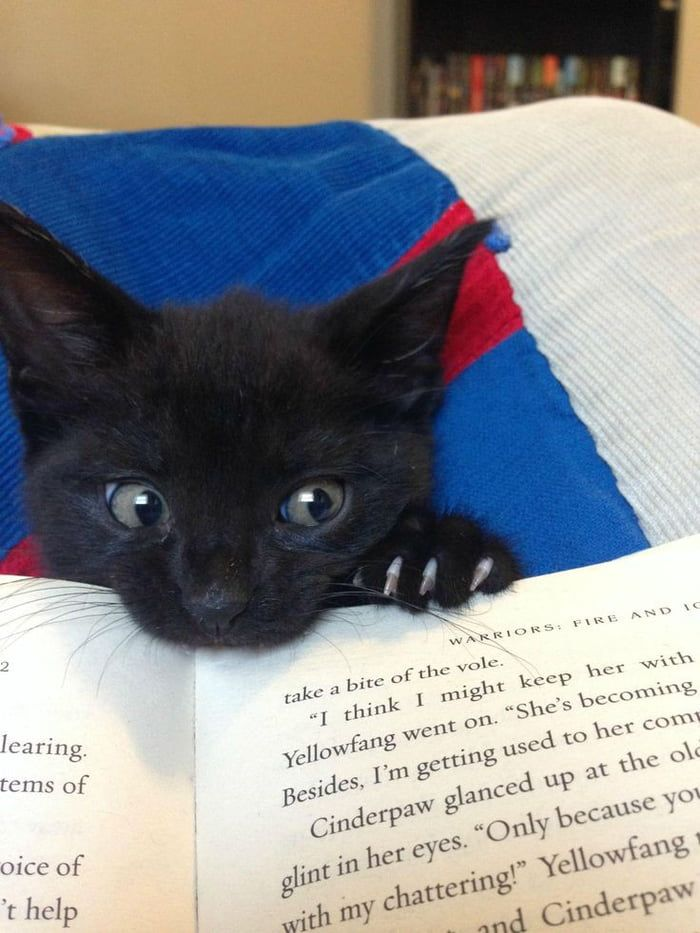 Baby Kitty Wanting Attention While Biting A Book Amphibians