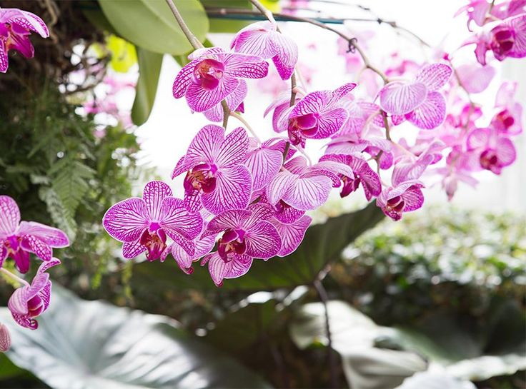 Best 25 orchid show ideas on pinterest the orchid orchid show feel the flower power go inside the orchid show at the new york botanical garden mozeypictures Gallery