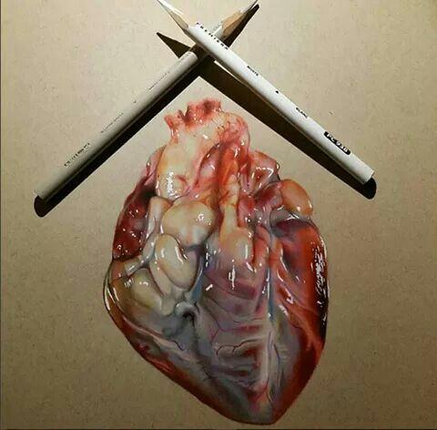 11 best Anatomy images on Pinterest   Anatomía, Cool stuff y Corazón ...