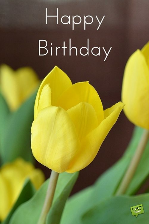 Happy Birthday Message In Zulu ~ Happy birthday images that make an impression yellow tulips and birthdays
