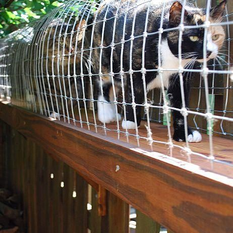 diy outdoor cat enclosure, pets animals, Taking a walk in the tunnel