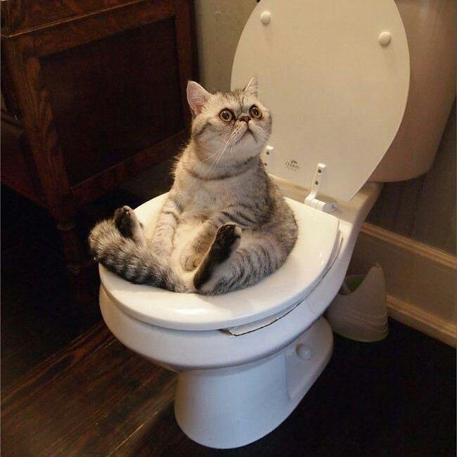 E qual do você  abre a porta do banheiro  e ele está  ocupado? #filhotes #kitty #kitten #gateirasposseresponsavel #gatos #gateiras #gatos #cats #canaldogato #gatinhos #petlover #adoteumronron #decoracao #força #amor #love #familia
