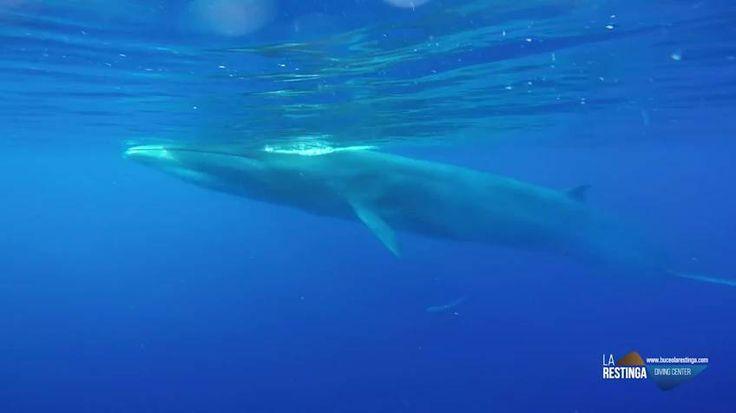 Las imágenes ha sido grabadas por una academia de buceo de la Isla del Hierro