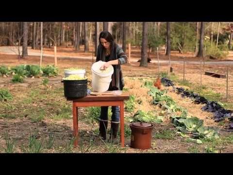 How to Ferment Cabbage: Making Sauerkraut www.gameandgarden.com