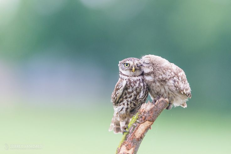10 Examples of how Cute and Hilarious Owls can be | Twisted Paddy