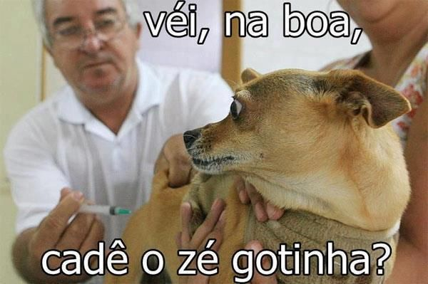 Confissões de um cão... kkkk