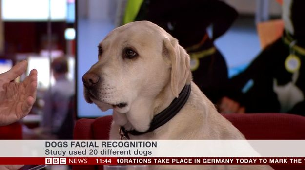 Thank you Bounce for livening up the news. | BBC News Just Had Their Best Ever Guest On The News Channel