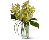 TFWEB396 Orchid Elegance  Felthousen's Florist 518-374-4414 or 800-278-2634 We Deliver world wide!