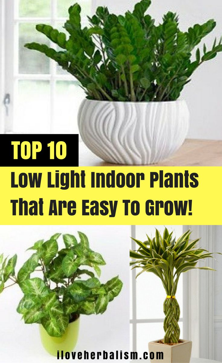 25 best ideas about indoor plants low light on pinterest indoor plant lights low light - Best house plants low light ...